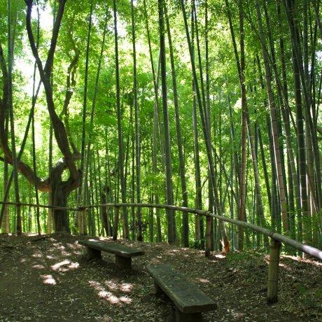 Khu vườn ở Rai Tei Kamakura
