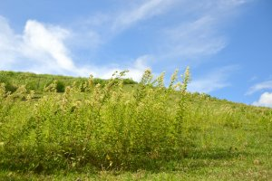 Wild grasses waved in the wind.