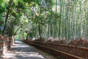 เดินไปในระหว่างป่าไผ่