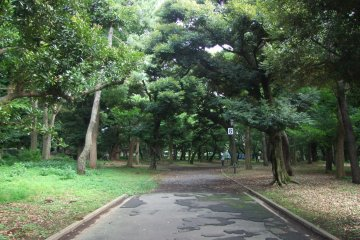 <p>Tree-lined paths &nbsp;</p>