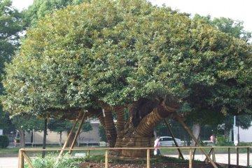 <p>Beautiful trees</p>
