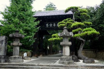 <p>Stone lanterns and a beautifully twisted pine stand before Erinji&#39;s gate</p>