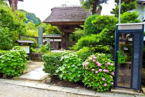 The main gate to Gokuraku Temple with its thatched roof and colorful flower garden