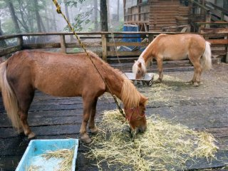 In addition to foxes, there are a few other animals such as horses, crows, rabbits, and goats