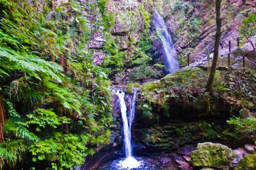 <p>At last! Reaching the final destination of Odaki-taki (the male waterfall) and Medaki-Taki (female waterfall)</p>