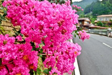 <p>Some beautiful pink flowers along the approach to San-taki (Three-Waterfalls)</p>