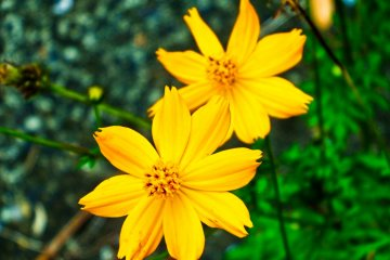 <p>Just some of many colorful flowers found along the riverbed</p>