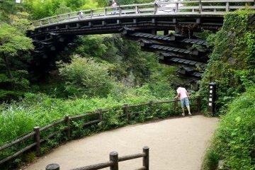 Saruhashi - Jembatan Monyet