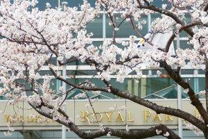 Royal Park Hotel in spring