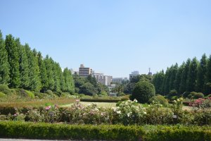 สวนสไตล์ฝรั่งเศสบนพื้นที่ขนาดใหญ๋