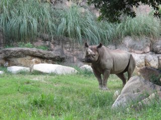 A rare black rhino blends in with its surroundings