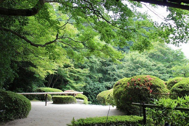 6月の新緑に萌える詩仙堂丈山寺