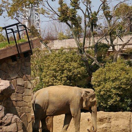 حديقة حيوان تينوجي
