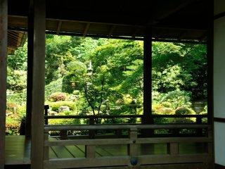 廊下越しに暫し足を停め、眩しいばかりの客殿前の庭を眺めました