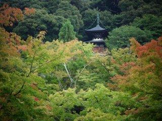 แม้สวนที่นี่จะขึ้นชื่อในฤดูใบไม้เปลี่ยนสี แต่หน้าฝนก็มีเสน่ห์ไม่แพ้กัน