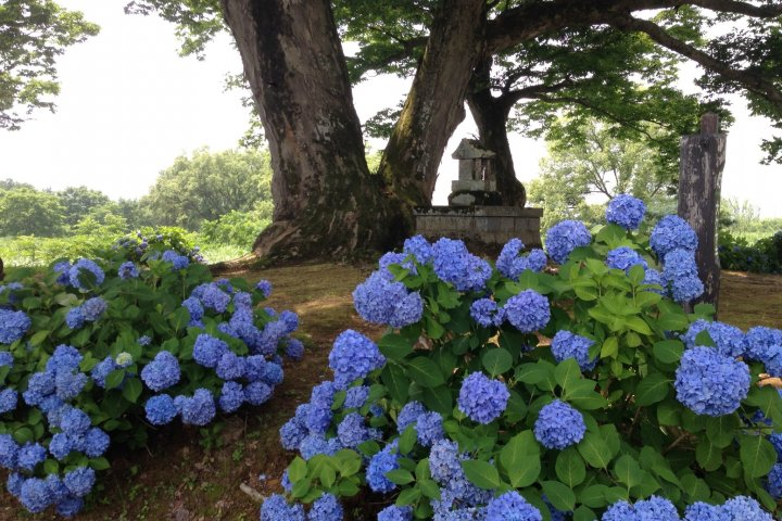 A Tiny Shrine Under a Big Tree