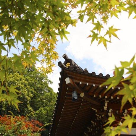 Jindaiji Soba at Yusui