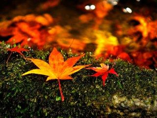 苔むした手水鉢に散り紅葉