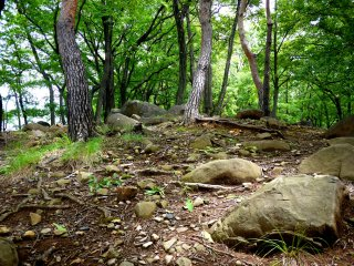 Large rocks are embedded in the earth under the trees