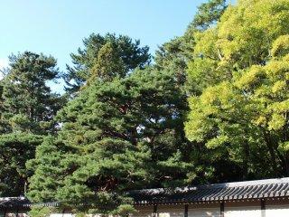 京都御苑の東側にある「大宮御所」と「仙洞御所」はとりわけ高樹齢の見事な植栽がみられる