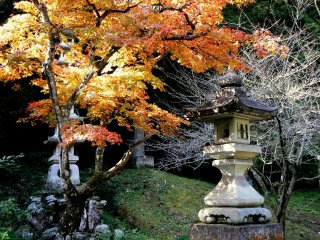 Stone lantern under a fiery maple