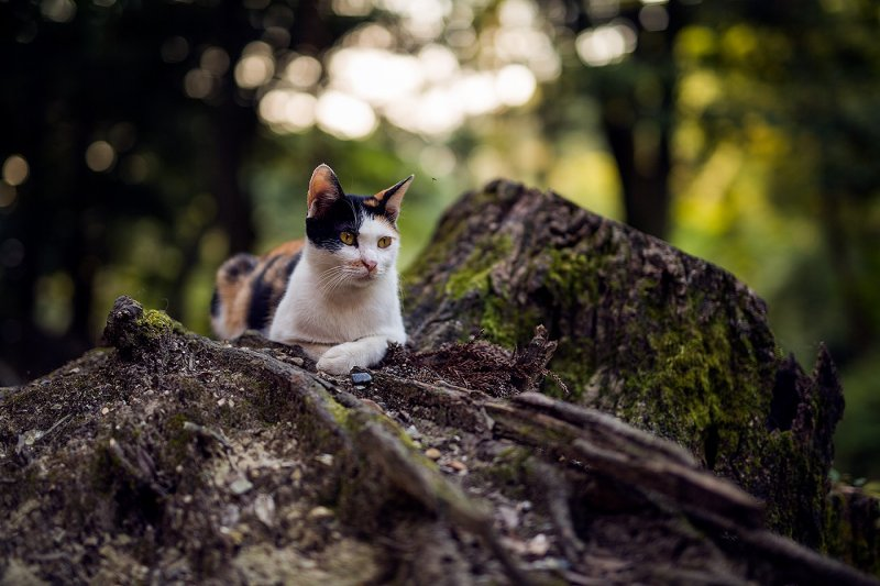 <p>A handsome cat rests against a mossy stump</p>