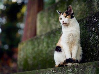 น้องแมวแสนเสน่ห์แอ็คท่าให้ถ่ายรูป