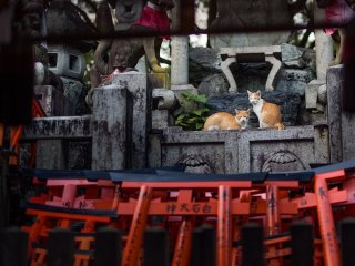 A couple of ginger and white cats rest by the feet of Fushimi Inari's stone foxes