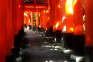 붉은 주황색 도리이 길