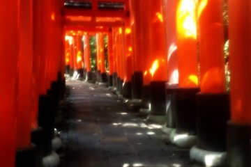 <p>붉은 주황색 도리이 길</p>