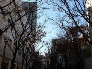 葉を散らした街路樹の通りは、冬のパリにとても似ている