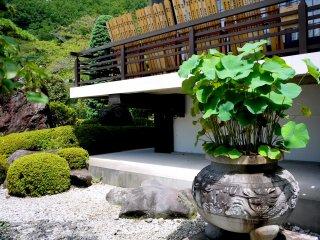 Lotus growing in a pot