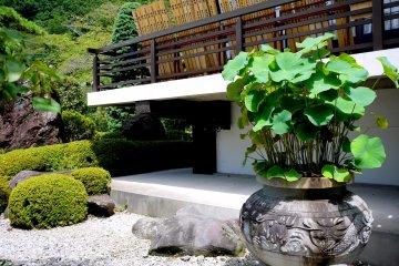 <p>Lotus growing in a pot</p>