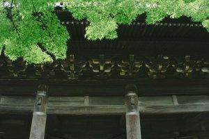 Pepohonan yang hijau nan segar menghiasi pemandangan gagahnya Gerbang Sanmon