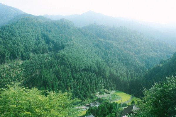 Pemandangan menuju Stasiun Gokurakubashi yaitu lembah dan perbukitan yang hijau menyegarkan mata