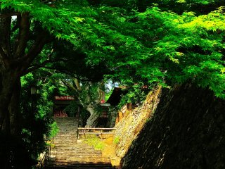 Greenery hangs over the path connecting one of the halls and the area where good luck Daruma dolls are offered
