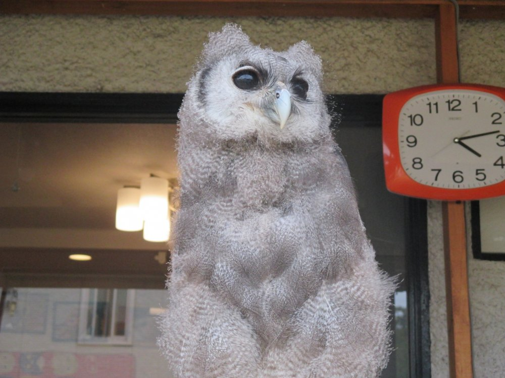 View both creepy and cute owls