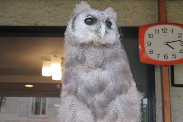 The Owls of Fukuro Sabo Cafe