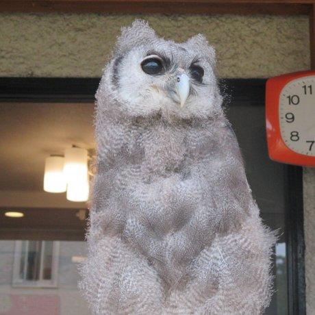 เหล่านกฮูกของ Fukuro Sabo Cafe