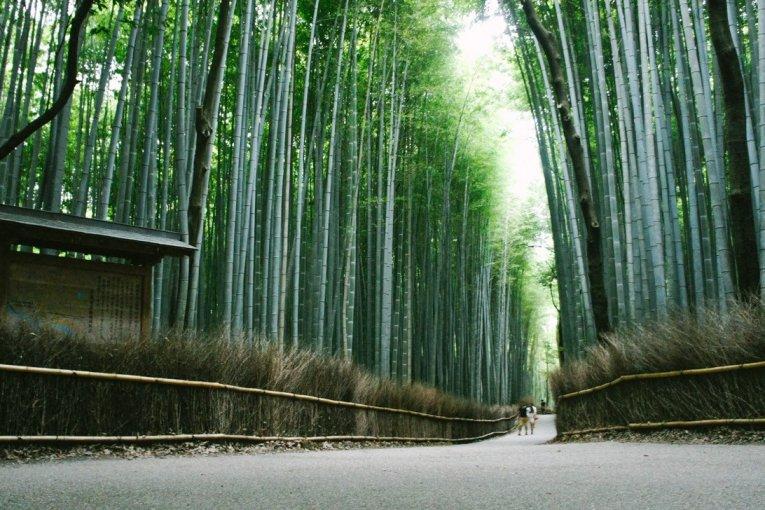 Arashimaya y el bosque de bambú