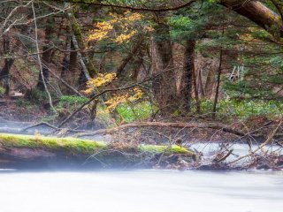 บนเส้นทางไปสู่พื้นที่ชุ่มน้ำ
