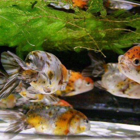 Eco Edo Art Aquarium