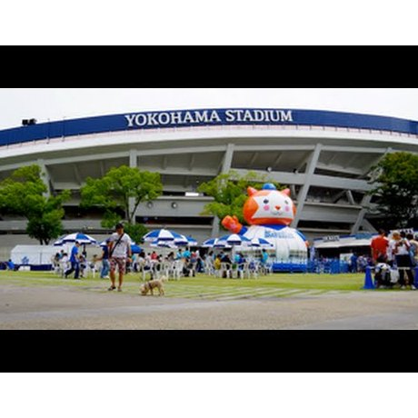 Yokohama Stadium Before a Game