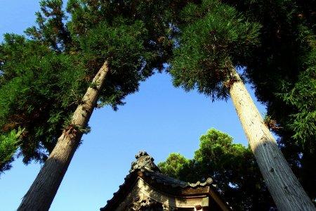 田んぼの中の白山神社: 福井