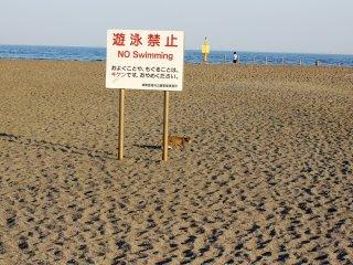 Bãi biển là khá nhiều cho treo trên và thưởng thức các đại dương, dòng nước không an toàn để bơi hoặc chơi đùa xung quanh, và tại biển báo có một con mèo thực thi kỳ lạ để đảm bảo các quy tắc được tuân theo.