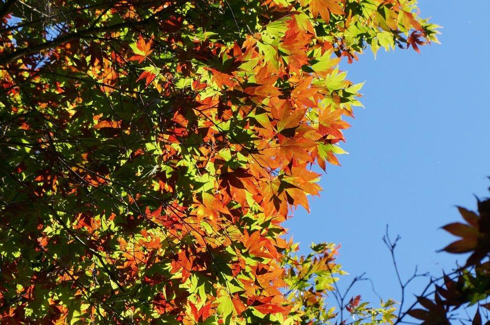 ใบไม้หลากสีกลางฟ้าใส