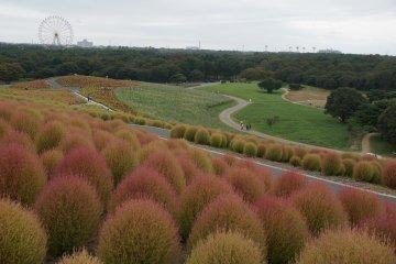 <p>พุ่มแดง หญ้าเขียว เป็นเนินที่เดินเพลิน</p>