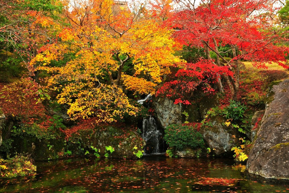 'Nikko-den' and the pond in front of it are open to the public only in November. For its autumn finale, the ground's colored leaves are falling dramatically