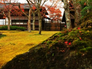 Gorgeous view of the moss garden adds special taste to a cup of Japanese green tea