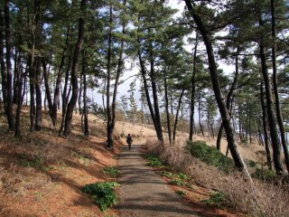 A park teeming with beautiful pine trees borders the cliff